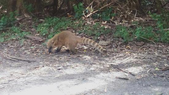 animais-do-parque-ecologico